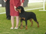 DEVIL WEARS PRADA, ROTTWEILER PUPPY PERTH, PERTH ROYAL SHOW IMAGE.jpg
